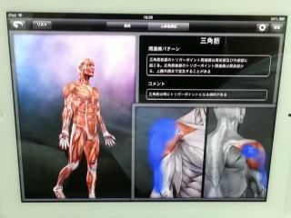 人体模型アプリを使った説明